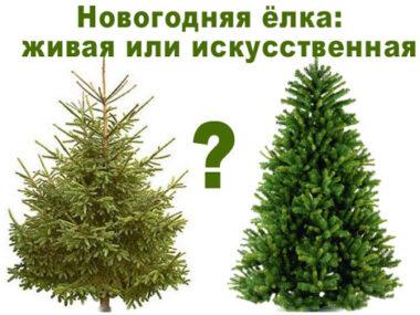 Что «зеленее» — настоящая или искусственная елка?
